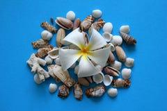 Белый цветок с seashells на голубой предпосылке Стоковые Фото