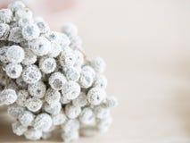 Белый цветок для предпосылки Стоковое Изображение RF