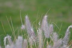Белый цветок Стоковое Фото