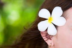 Белый цветок frangipani стоковое фото