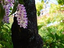 Белый цветок rchid Стоковое фото RF