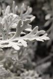 Белый цвет выходит предпосылка Стоковая Фотография RF