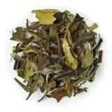 Белый чай Pai Mu Tan Стоковые Изображения RF