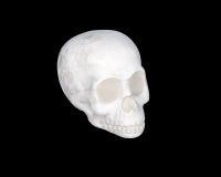 Белый череп на черноте Стоковые Фотографии RF