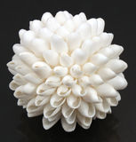 Белый шарик Seashell Стоковая Фотография RF