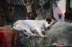 Белый щенок Стоковое фото RF