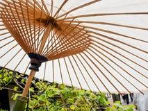 Белый японский зонтик Стоковое фото RF