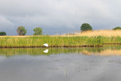 Белый egret на реке Стоковое Фото