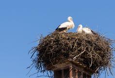 2 белых аиста в их гнезде Стоковое Изображение RF