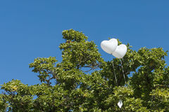 2 белых воздушного шара на дереве Стоковая Фотография