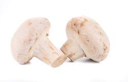 2 белых гриба закрывают вверх. Стоковое фото RF