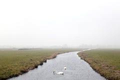 2 белых лебедя в канале в Нидерланд Стоковые Изображения