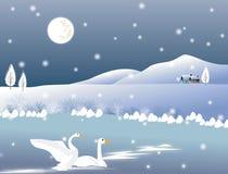 2 белых лебедя на предпосылке Стоковые Фотографии RF
