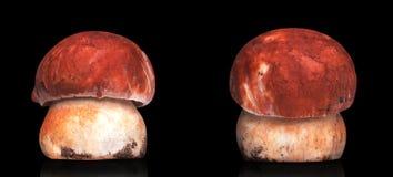 2 белых изолированного гриба Стоковые Изображения RF
