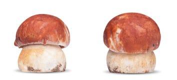 2 белых изолированного гриба Стоковое Фото