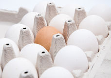 9 белых и одного коричневых яичка Стоковые Фото
