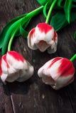 3 белых красных тюльпана Стоковые Изображения RF