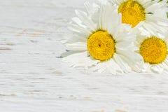 3 белых маргаритки на белой деревянной предпосылке Стоковое Изображение RF