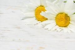 2 белых маргаритки на белой деревянной предпосылке Стоковое Изображение