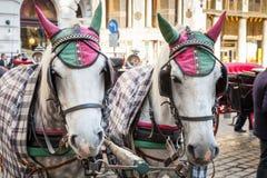 2 белых лошади обузданной к экипажу Стоковое Изображение