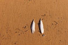 2 белых пера чайки на пляже Стоковые Фото