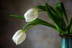 2 белых тюльпана в вазе фарфора против деревенской стены Стоковые Фотографии RF