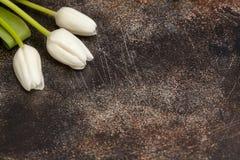 3 белых тюльпана на коричневой предпосылке Стоковые Изображения RF