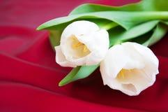Тюльпаны на красной сатинировке Стоковое фото RF