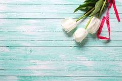 3 белых тюльпана на планках бирюзы деревянных Стоковые Фото