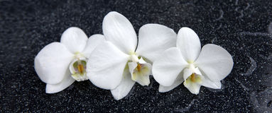 3 белых цветка орхидеи Стоковые Изображения
