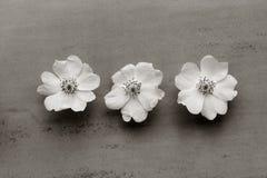 3 белых цветка одичалого подняли на серую предпосылку Стоковая Фотография RF