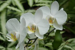 3 белых цветка Стоковое Изображение