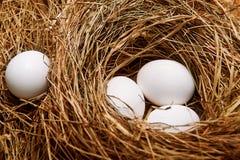 Яичка в гнезде Стоковая Фотография RF