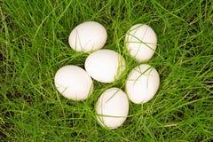 3 белых яичка в зеленой траве Стоковая Фотография RF