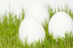 3 белых яичка в траве Стоковое Изображение