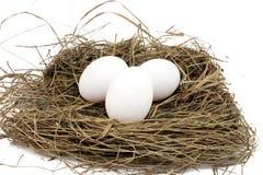 3 белых яичка цыпленка Стоковые Изображения RF