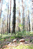 2 белых CEP деревянного Стоковые Фото