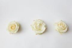 3 белых rosebuds Стоковые Фотографии RF