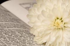 Библия (взгляд 6) стоковое фото