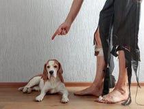 Бигль и его предприниматель в сорванных брюках и сдержанных ногах стоковая фотография rf