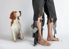 Бигль и его предприниматель в сорванных брюках и сдержанных ногах стоковые изображения rf