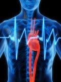 биение сердца Стоковое Изображение RF