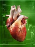 биение сердца Стоковая Фотография