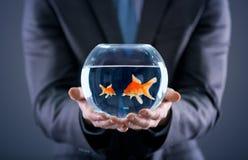 Бизнесмен держа малых и больших рыб золота Стоковое Изображение