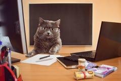 Бизнесмен кота с стеклами на table4 Стоковые Фотографии RF