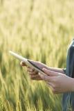 Бизнес-леди используя цифровую таблетку в поле Стоковая Фотография RF