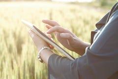 Бизнес-леди используя цифровую таблетку в поле Стоковые Фотографии RF