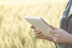 Бизнес-леди используя цифровую таблетку в поле Стоковое Изображение RF