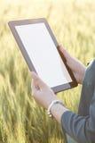 Бизнес-леди используя цифровую таблетку в поле Стоковые Фото
