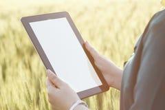 Бизнес-леди используя цифровую таблетку в поле Стоковые Изображения